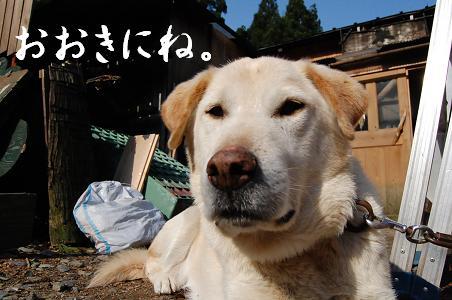 DSC_0024KANBAI.JPG