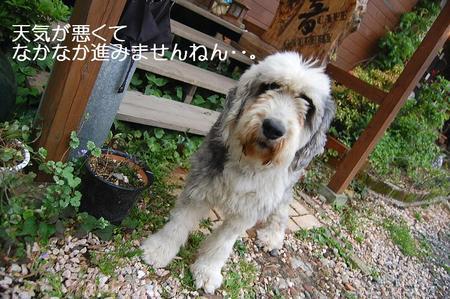 DSC_0065terasu2.jpg